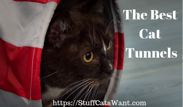 a cat in a tunnel with the text the best cat tunnels