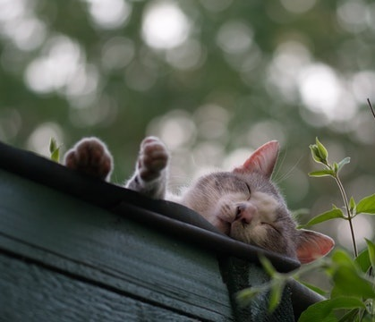 cats love sleeping in high places