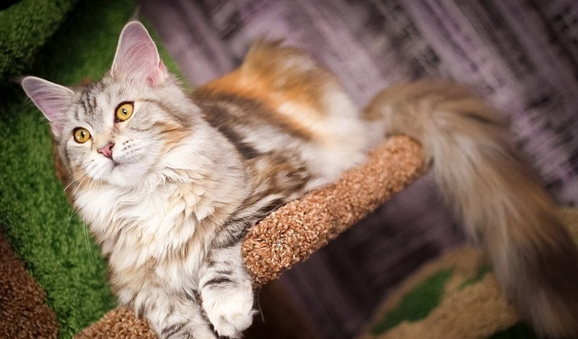 1ee2f06af718 The 15 Best (Safe and Stable) Cat Trees for Large Cats 2019