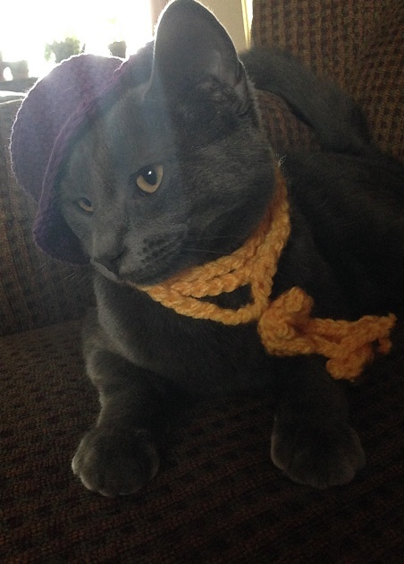 a grey cat named Smokey wearing a killer outfit with a purple hat and yellow knit scarf