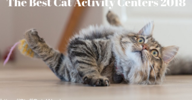 the best cat activity centers feature image