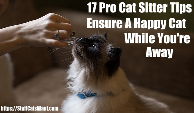 17 pro cat sitter tips ensure a happy cat while you're away