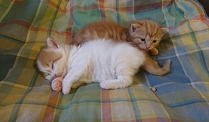 two kittens sleeping on top of each other