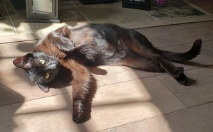 a black cat lazing about on a grey hardwood floor
