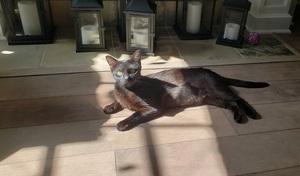 black cat named Jill on a grey floor