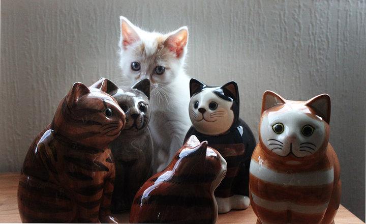 milo the turkish van cat hiding in some figurines