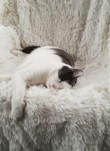 rori sleeping on a comfortable chair