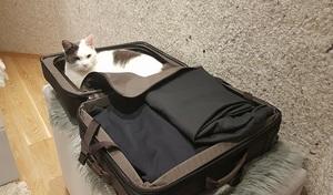 rori in a suitcase