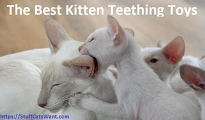 a white kitten biting his mother's ear