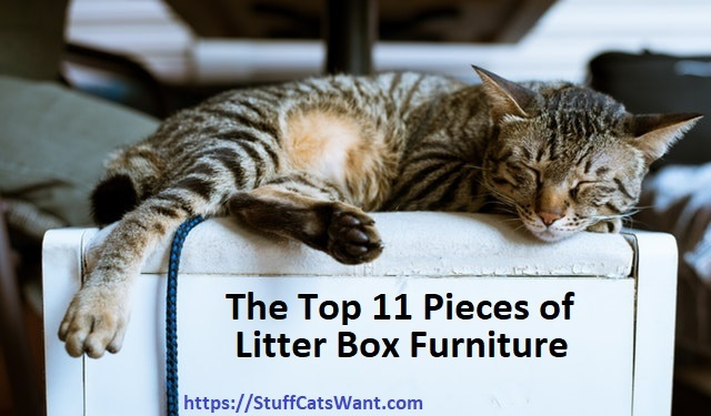 A Cat Sleeping On Top Of Bench General Litter Bo Product Reviews