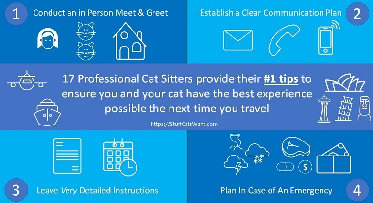 4 of the top tips from professional cat sitters
