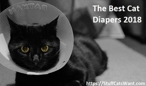 cat in a cone after surgery