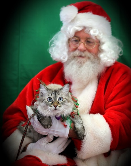 Felicia getting pictures with Santa