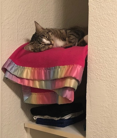 Binx the cat sleeping in his cubby hole