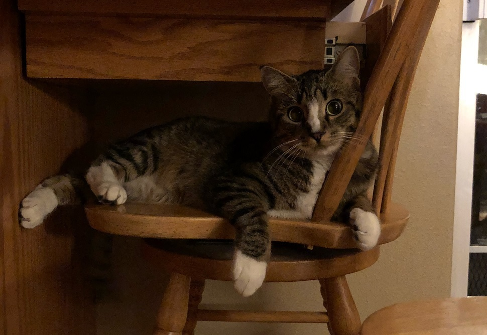Binx the cat laying around on a wooden chair