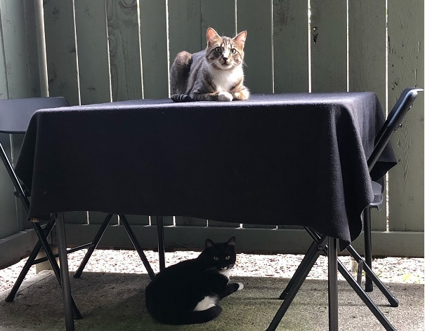 Binx on top of the table and his girlfriend Beast Boy below it
