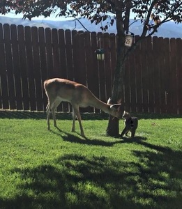 Binx the cat making friends with a deer