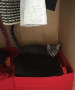 rory in the wardrobe