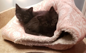 two kittens sleeping on top of a cat cave