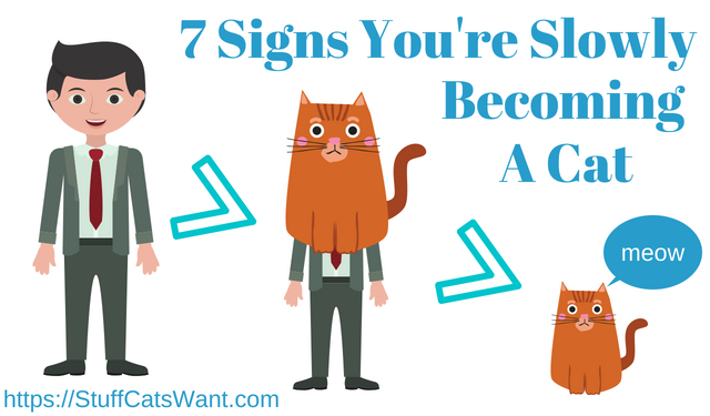 Seven signs you're slowly becoming a cat
