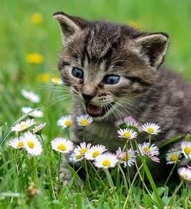 super excited kitten