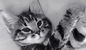 clio the cat feature photo