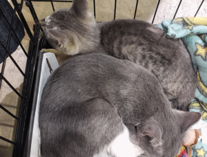 kittens sleeping after the agility course