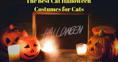 several pumpkins with text that says the best Halloween costumes for cats