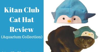The Kitan Club Cat Hat on a grey cat
