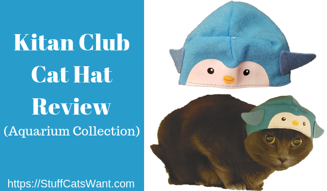 The Kitan Club Cat Hat on a grey cat