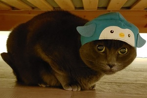 Beast hiding under the bed with the kitan club cat hat one