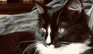 black and white cat theon