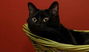 a black cat in a basket