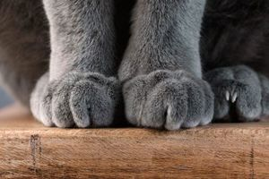a pair of cat paws close up