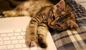a kitten on a laptop