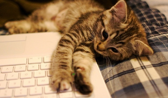 a kitten on a laptop