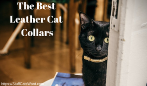 The best leather cat collars feature photo