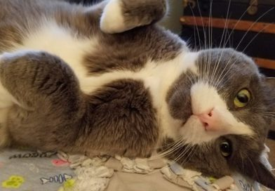 gizmo the cat laying down