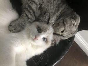 Luna and Riceball sleeping together