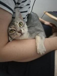askja in Tris's boyfriend's lap
