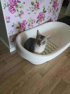 askja in a tub