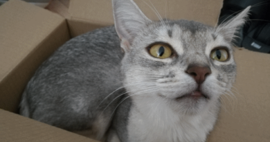 askja in her box