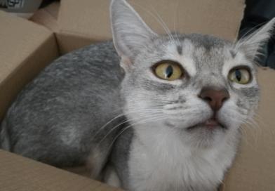 askja in her box