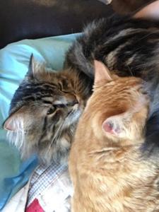 baron and biggie snoozing together