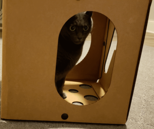 a cat box for happiness with beast hiding in it