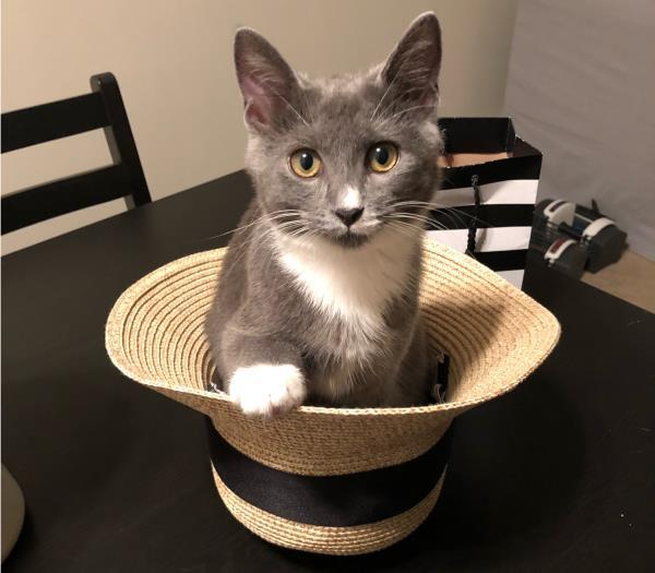 socks in a hat