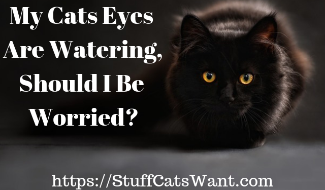 a black cat with large eyes and text that says my cats eyes are watering
