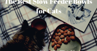 a cat sniffing coffee and text saying the best slow feeder cat bowls for cats