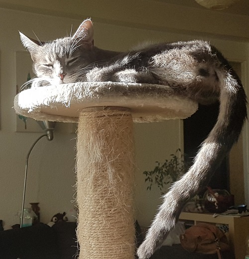 gribouille on her cat tree