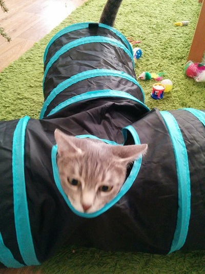 gribouille in her cat tunnel